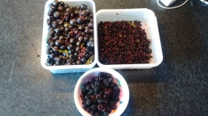 blackberries elderberries sloe foraging jam recipes